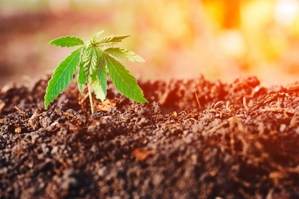 Effect of contaminated land on CBD products