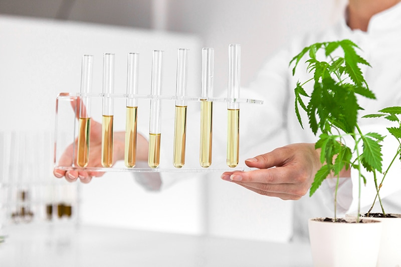 Reliable high quality cannabidiol products